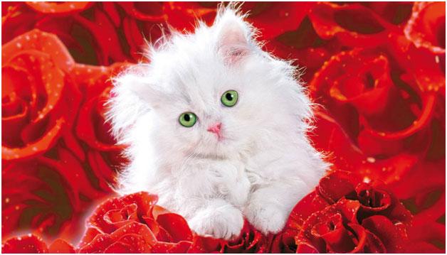cute-caty