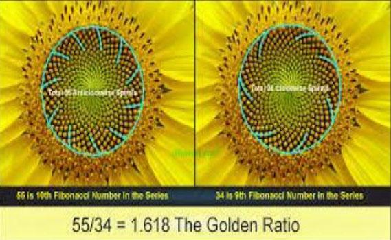 golden-ratio