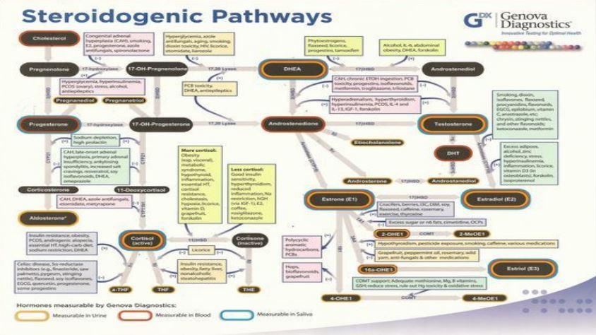 steroidogenic-pathways